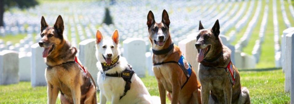 4-War-Dogs