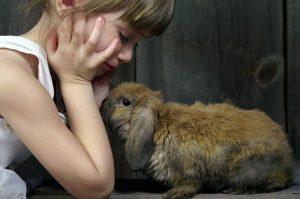 Rabbit 101