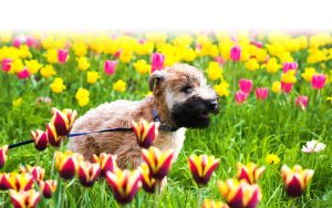 Preparing Your Pets for Spring