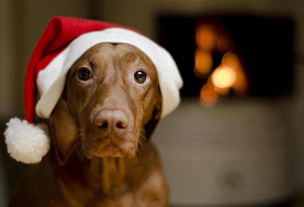 Christmas Safety