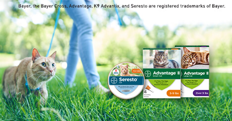 New: Every Day Low Pricing <br /> Pest Protection for your Cat