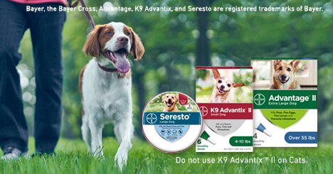 New: Every Day Low Pricing <br /> Pest Protection for your Dog